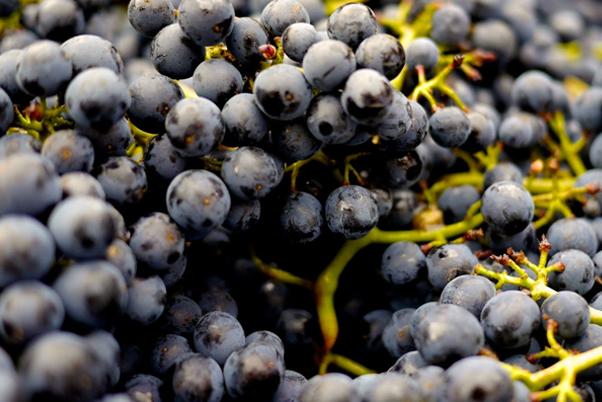 winearieties.jpg