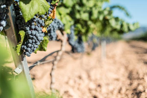 grapevarieties-winetasting.jpg